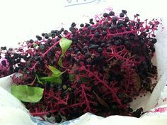 Ithaca Waldorf Handwork & more: Pokeweed Plant Dyeing