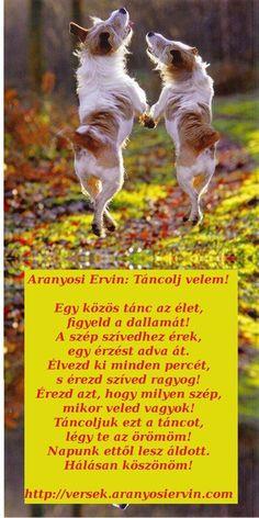 Aranyosi Ervin: Táncolj velem Verses, Poems, Corgi, Life Quotes, About Me Blog, Fantasy, Motivation, Pictures, Animals