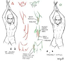 Anatomy Sketches, Anatomy Drawing, Anatomy Art, Body Anatomy, Human Anatomy, Art Poses, Drawing Poses, Drawing Tips, Body Reference Drawing