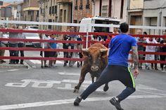 Santacara: Sergio Olite Animals, October 8, Cows, Siblings, Animales, Animaux, Animal, Animais