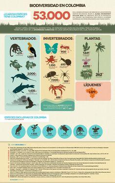 la biodiversidad infografía - Google Search