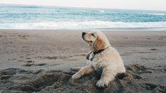 Beach Baby 🐶🐾🐋