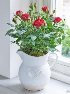 Featuring a red flowering rose planted in a white ceramic jug with embossed flower motif. Order Flowers Ireland