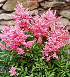 This gorgeous Astilbe thrives in the shade! More of the best perennials for shade: http://www.bhg.com/gardening/flowers/perennials/the-best-perennials-for-shade/?socsrc=bhgpin080613astilbe=12