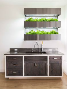 EcoWall Garden, a hydroponic, vertical garden for the home chef. Fresco, Herb Wall, Traditional Doors, Herbs Indoors, Kitchen Cabinet Design, Garden Furniture, Home Kitchens, Banners, Diys