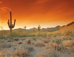 Desert scene - Tempe, Arizona