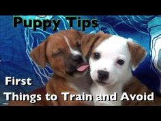 Puppy Tips 3- First things to train and avoid- Clicker Dog Training~ Good tutorial videos on training puppies and dogs. + Clicker training