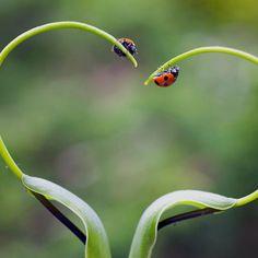 Lady bug, love.
