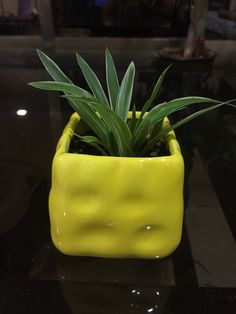 Spider plant in its cute little adobe.  For purchase call or whatsapp on- +91 8452999322
