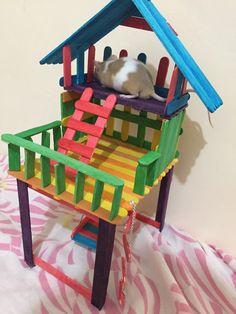 #aww #cuterats #petmouse #mouse #ratsofpinterest