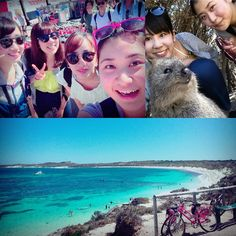 \\Rottnest Island// We had a special day on last weekend!!  #rottnestisland  #quokka  #cute  #Australia by misamisa.120141 http://ift.tt/1L5GqLp