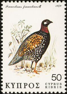 Black Francolin stamps - mainly images - gallery format