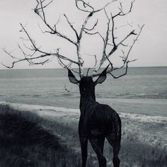 looks like deer is trying to cosplay as Forest god from Princess mononoke Black White Photos, Black And White, Oh Deer, Wire Art, Bambi, Belle Photo, Faeries, Photo Art, Illustration