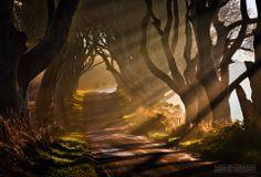 The Dark Hedges, Co Antrim, Gary McParland Landscape Photography  http://cincuentopia.com/