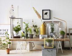 Atelier Decor: Quadros botânicos e medicinais