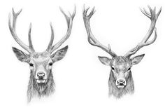 Image result for mariel & marita deer head