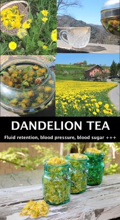 This healthy dandelion tea helps fight edema, high blood pressure, and diabetes. Dandelion tea for the win! Herbal Remedies, Natural Remedies, Health Remedies, Holistic Remedies, Healing Herbs, Medicinal Plants, Herbal Tea Benefits, Herbal Teas, Herbs