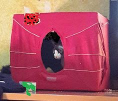 PGASO13: Un lugar para mi gato