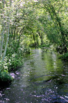 Sparkling Stream ~ #Photography #Nature