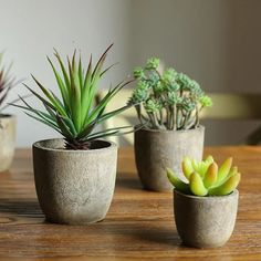 """PRODUCT Artificial Plant - Handmade Artificial Succulent PLANT Succulent in Planter DIMENSIONS 2"""" - 4"""" Tall Randomly picked 5 pieces per set MATERIAL Plastic, Latex Coated, Glue, Resin, Others COLOR Green, Mixed Colors SHIPPING INFORMATION Product ships out within 48 business hours of receiving order; Ships to United S Small Artificial Plants, Artificial Succulents, Small Succulents, Planting Succulents, Artificial Flowers, Planting Flowers, Succulent Plants, Succulent Ideas, Succulent Containers"""