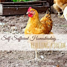 Self-Sufficient Homesteading – Realizing a Dream - The best tip I can give anyone wanting to start living a self-sufficient homesteading lifestyle is to become a producer, not a consumer. #Homesteading