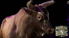 The memorable bulls of the PBR. By: Slade Long June 29, 2015. Looking back at the history of the PBR, quite a few bulls have passed through and made their mark. In the 22 years that the PBR has held events, the quality of bulls used everywhere in bull riding has steadily improved.