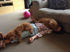 These fluffy puppies who double as blankets. | 42 Pictures That Will Make You Almost Too Happy