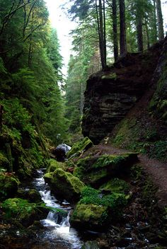 Puck's Glen | Scotland
