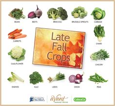 The 14 best vegetables for fall gardening