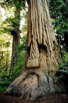 Maravillosas fotografias de árboles con forma de rostros humanos - Vida Lúcida