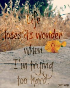 Life loses it's wonder, when you are always trying so hard.