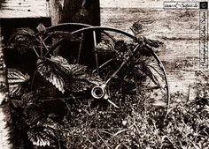 Schwarzweißfotografie, Bilder ohne Farbe