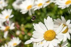 Alejodorowsky: Si concebimos al Dios interior, todo lo que cae en nuestras manos, todo lo que escuchamos, vemos, experimentamos, puede convertirse en símbol Insects, Bee, Fairy, Interior, Nature, Photography, Animals, Falling Down, Hands