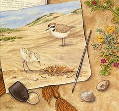 Acorn Naturalists- great resource for all things nature, tools and study supplements