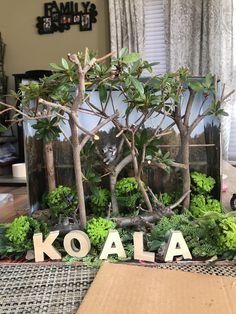 Koala diorama- Australian Eucalyptus Forest Science Projects For Kids, Craft Activities For Kids, School Projects, Fox Facts For Kids, Animals For Kids, Diorama Kids, Ocean Diorama, Bear Habitat, Australia Crafts