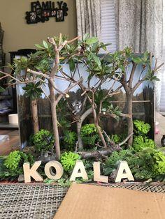 Koala diorama- Australian Eucalyptus Forest