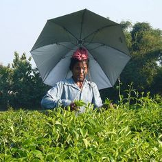 2016/11/27 15:25:17 tearevolution_marie 🌿大阪のオバチャンもビックリ👏👏 「傘刺さってますけど・・・」 自転車に傘を取り付けられるようにしてあるのは大阪でよくみられる風景ですが 我が身に取り付けるとはビックリです😁 帽子かぶるより涼しいのかもしれないですね。 茶摘みさん、凄いです👍 #紅茶 #Tea #インド #スリランカ #茶園 #茶葉 #チャイ #マサラチャイ #ミルクティー #アイスティー #美味しい #おもてなし #家族揃って #ホームパーティー #健康 #きれいになる #元気になる #機能飲料 #紅茶うがい #おうちカフェ #スイーツ #和菓子 #美味しく淹れるコツ #簡単にできる #子供でも飲める #牛乳 #低温殺菌牛乳 #美味しいって幸せ #健康って幸せ #カフェイン #健康