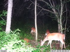 Ohio Trail Cam Game Camera