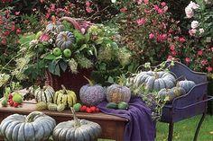 pumpkin  Christien Reinders Buggenum
