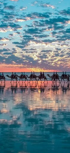 #Ride a #camel by the #ocean in #Broome, #Australia http://en.directrooms.com/hotels/subregion/5-43-466/