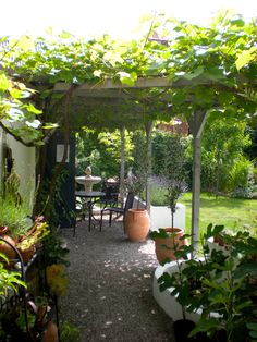 Behind the house where I do my potting & such. Lovely, with grapes growing too. pc