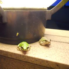 Frogs ... They never move ...