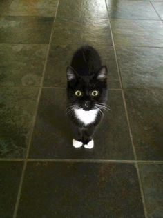 Ruby my tuxedo kitty. <- She's absolutely gorgeous, I love Tuxies!