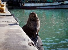 Cape Town, Butterflies, Seal, Fur, Photography, Animals, Photograph, Animales, Animaux