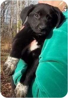 a lab-coonhound mix. are you kidding? this would be the SWEETEST dog. plus she's freaking adorable.