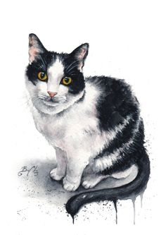 15 Amazing Watercolour Cat Drawings And Cat Portraits By Artist Braden Duncan Gato Animal, Easy Animal Drawings, Watercolor Cat, Portrait Watercolour, Cat Sketch, Unique Cats, White Cats, Domestic Cat, Cat Drawing