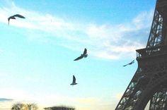 Photo d'oiseaux près de la tour eiffel