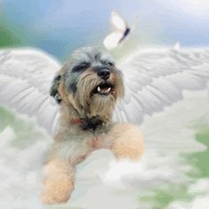 Free Pet Loss Page for Miniature Schnauzers at Rainbow Bridge Pet Loss Quotes, Animals And Pets, Cute Animals, Pet Loss Grief, Dog Poems, Dog Heaven, Rainbow Bridge, Pet Memorials, Animal Quotes
