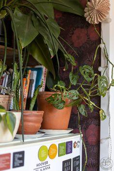 Oravanpesä: HEIPPA 2020. Plants, Instagram, Plant, Planets