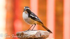 Birding Trip Report: Kameelfontein with Rihann Geyser and Ben Fouche. Bird Watching, Beautiful Birds, Robin, Animals, Animales, Animaux, European Robin, Animal, Animais